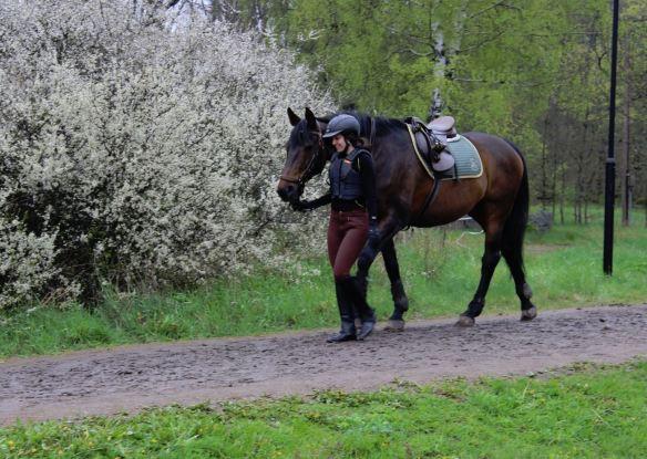 leda hästen